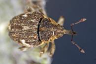 Naturspaziergang Käfer Nach Farben Formen Und Größen Braun