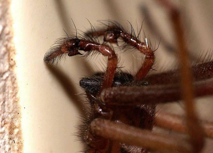 finden spinnen zurück